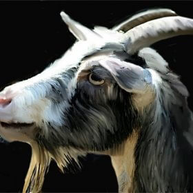 Is goat head good for health?