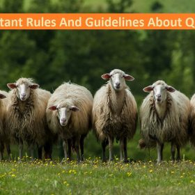 Most Important Things About Qurbani