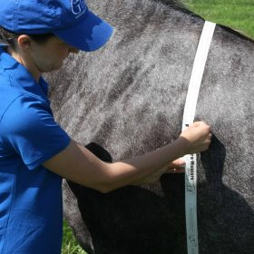 Estimating a Weights Of Horses | HappyChickensFarm