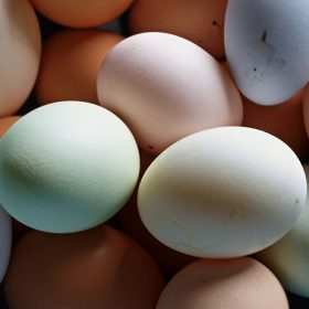 An Egg in Every Hue the Secret to Colorful Chicken Eggs