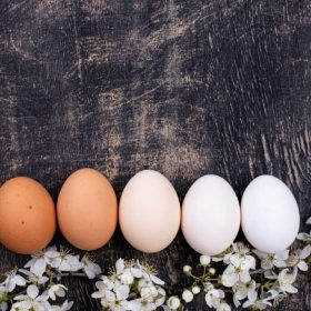 Top Chicken That lay White Eggs? A List of the 10 Best White Egg Laying Chickens