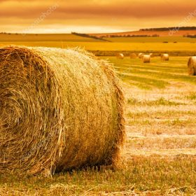 Differences Between Hay Pellets And Baled Hay