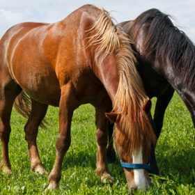 Horse Diet No Hay | Introducing your horse to forage